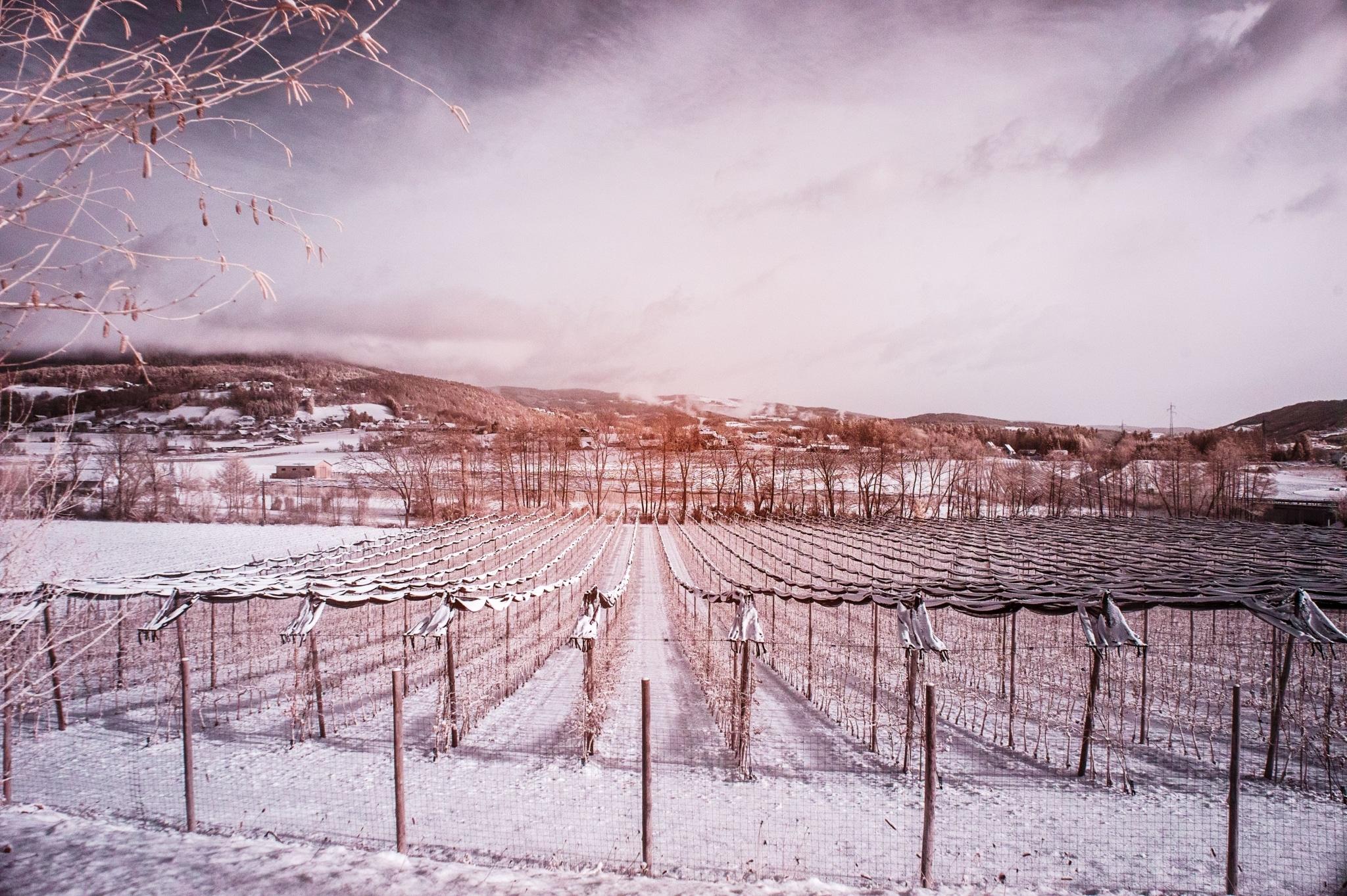 Weiz-Umgebung in Schnee gehüllt