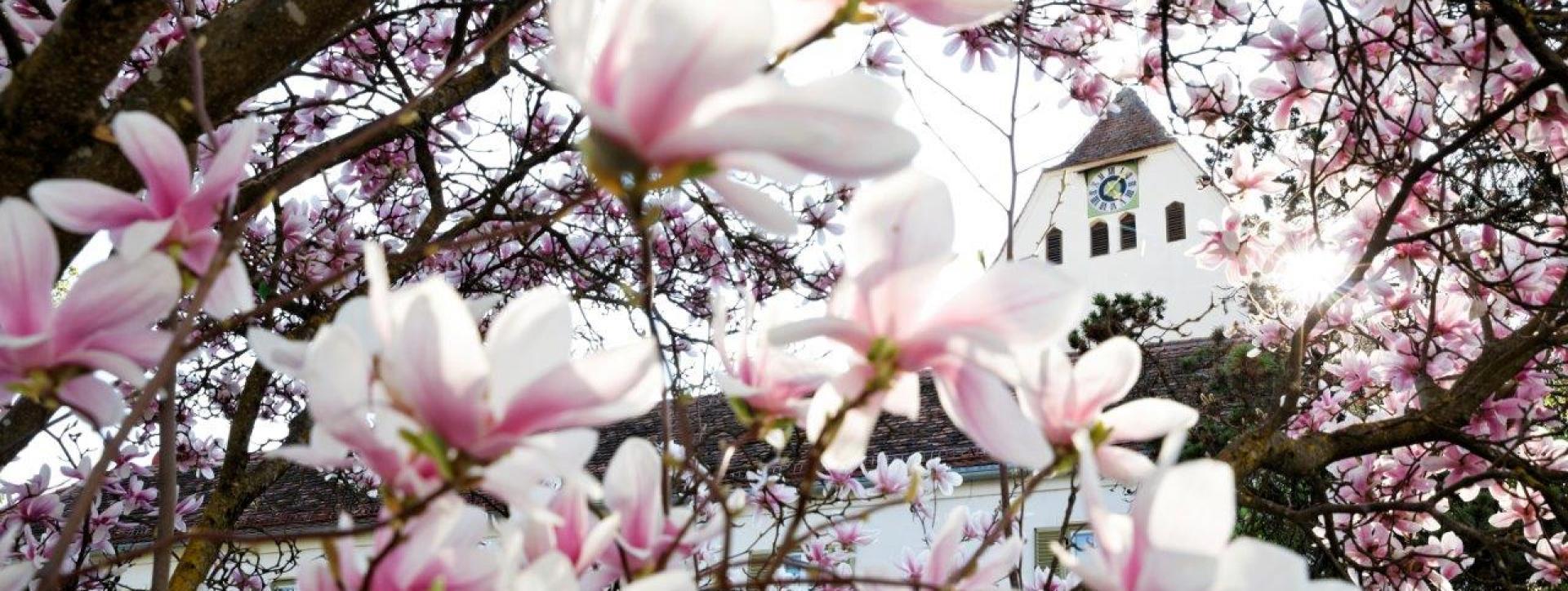 Taborkirche Frühling