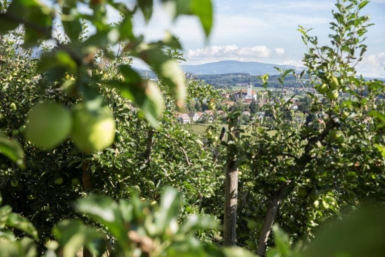 Apfelgarten in St. Ruprecht an der Raab