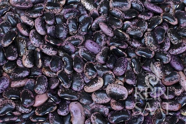Käferbohne Bonela