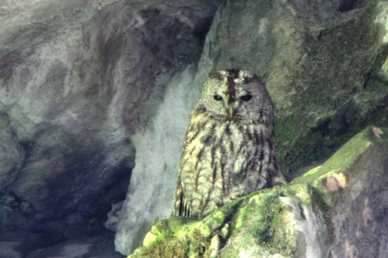 Katerloch Eulenkater - der Namensgeber der Höhle