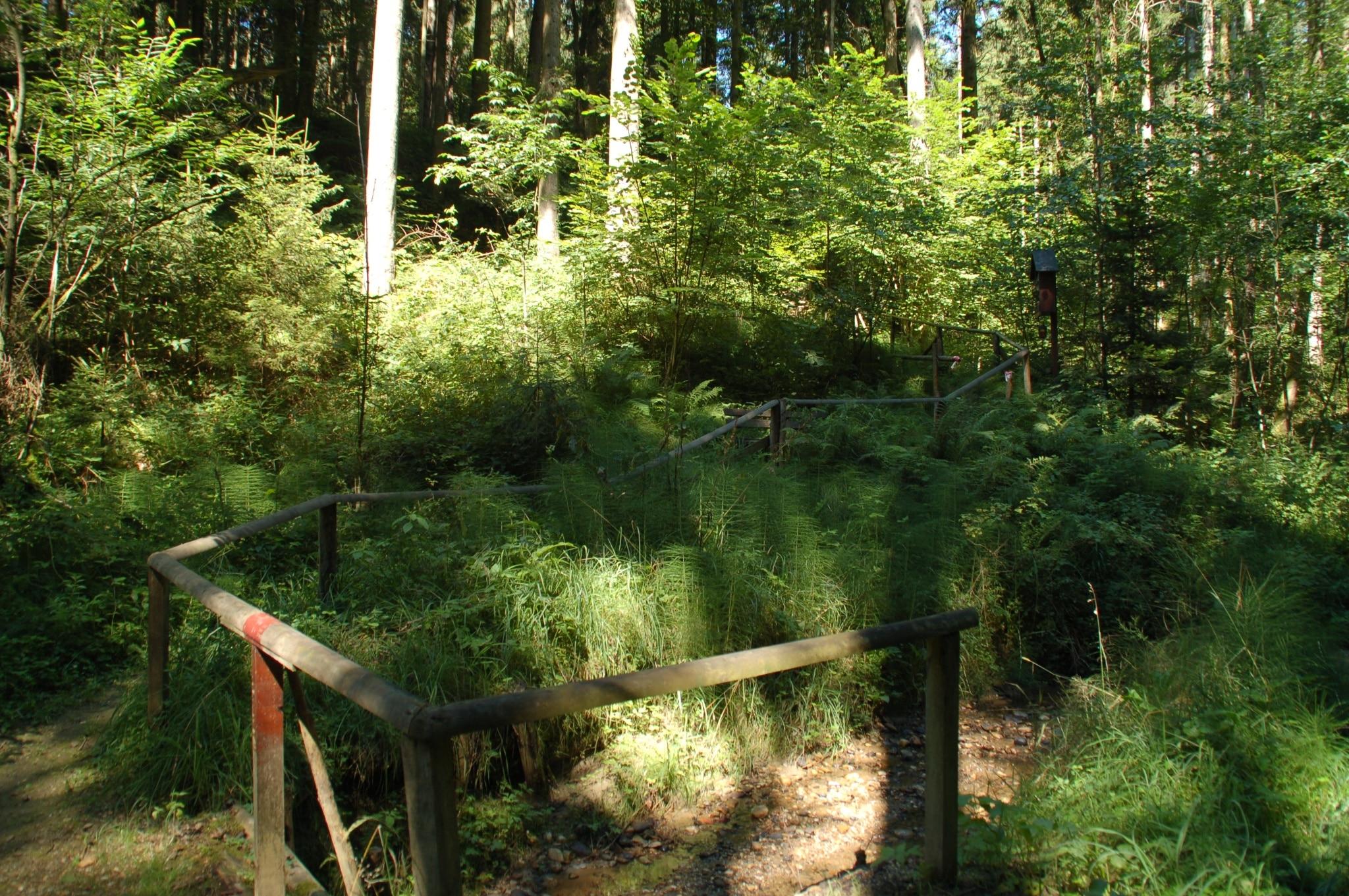Panoramaweg im Wald
