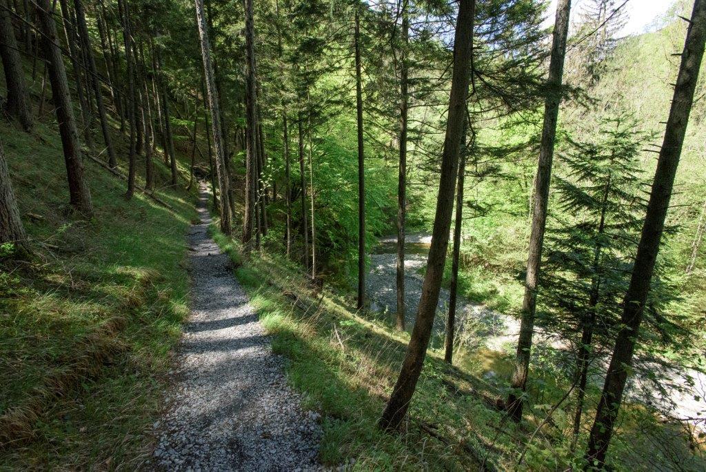 Raabklamm Waldwege