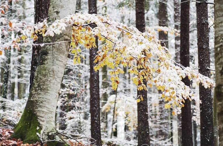Winter in der Oststeiermark - St. Ruprecht