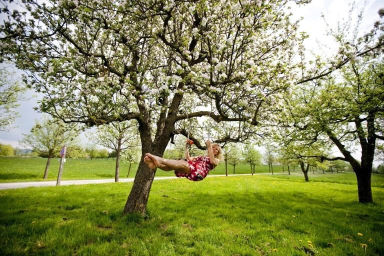 Apfelblüte Oststeiermark
