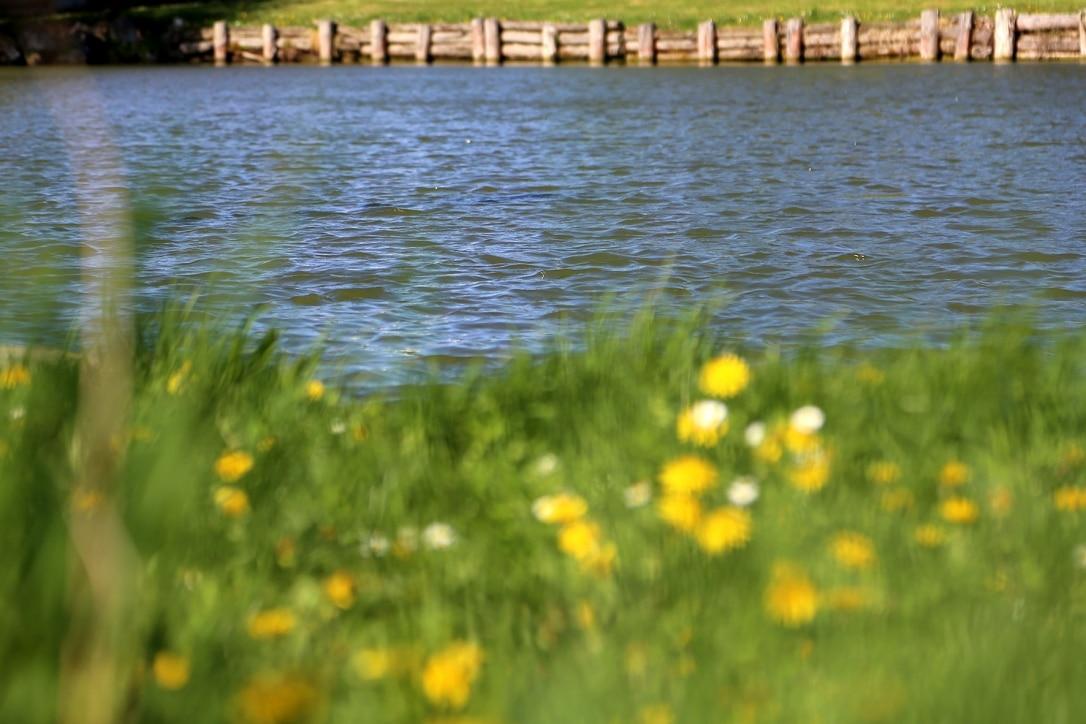 Locker Teich St. Ruprecht an der Raab