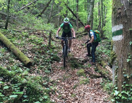 Mountainbike Waldweg