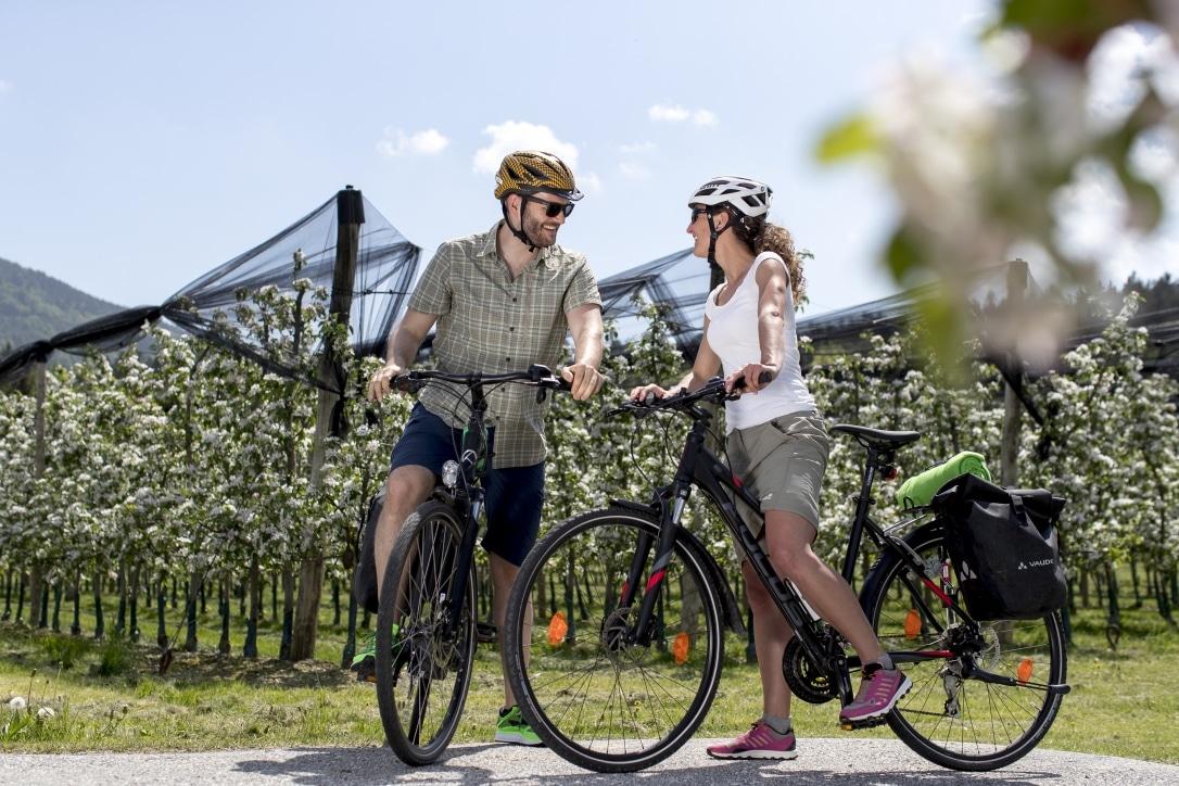 Radfahren im Frühling zwischen Apfelblüten auf der Weinland Steiermark Radtour nahe Puch. Oststeiermark