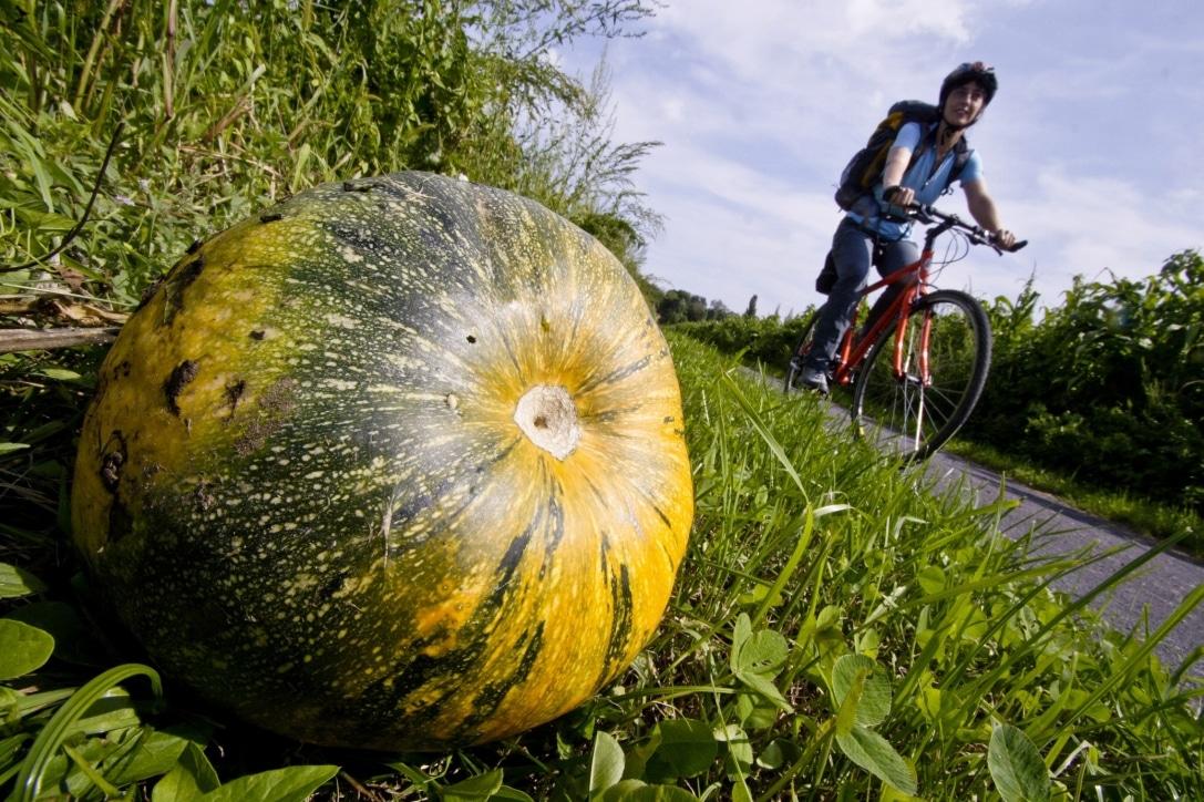 Radfahren Kürbis