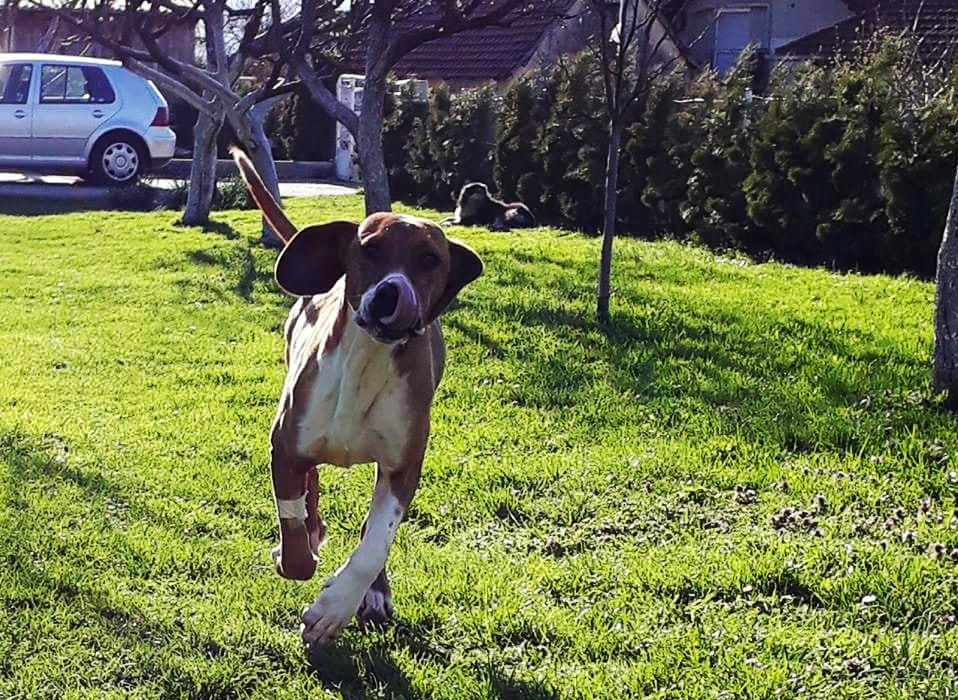 Hundebetreuung Kapler