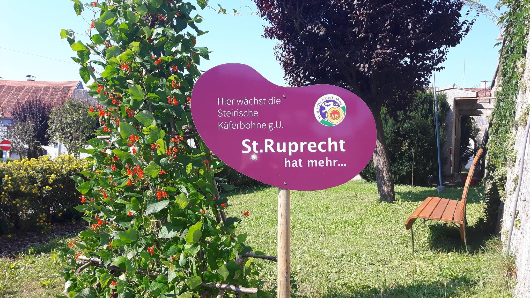 Käferbohne Hauptplatz St. Ruprecht an der Raab
