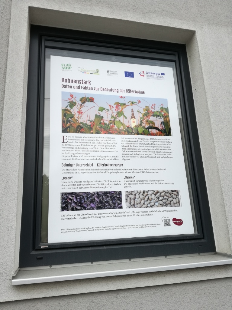 Käferbohnenfenster 6