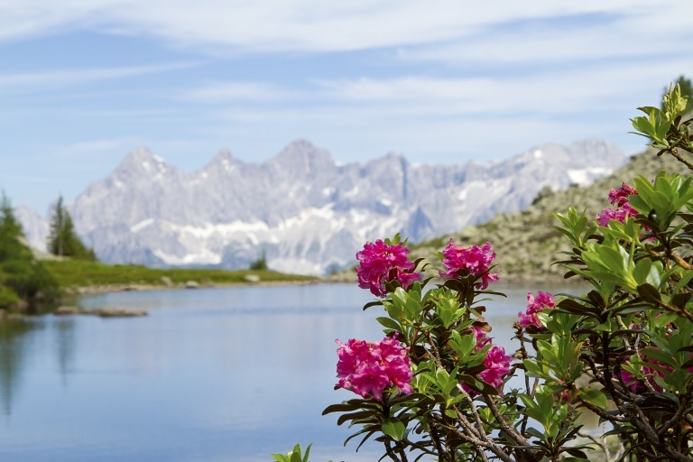 Spiegelsee auf der Reiteralm zur Almrauschblüte mit Blick