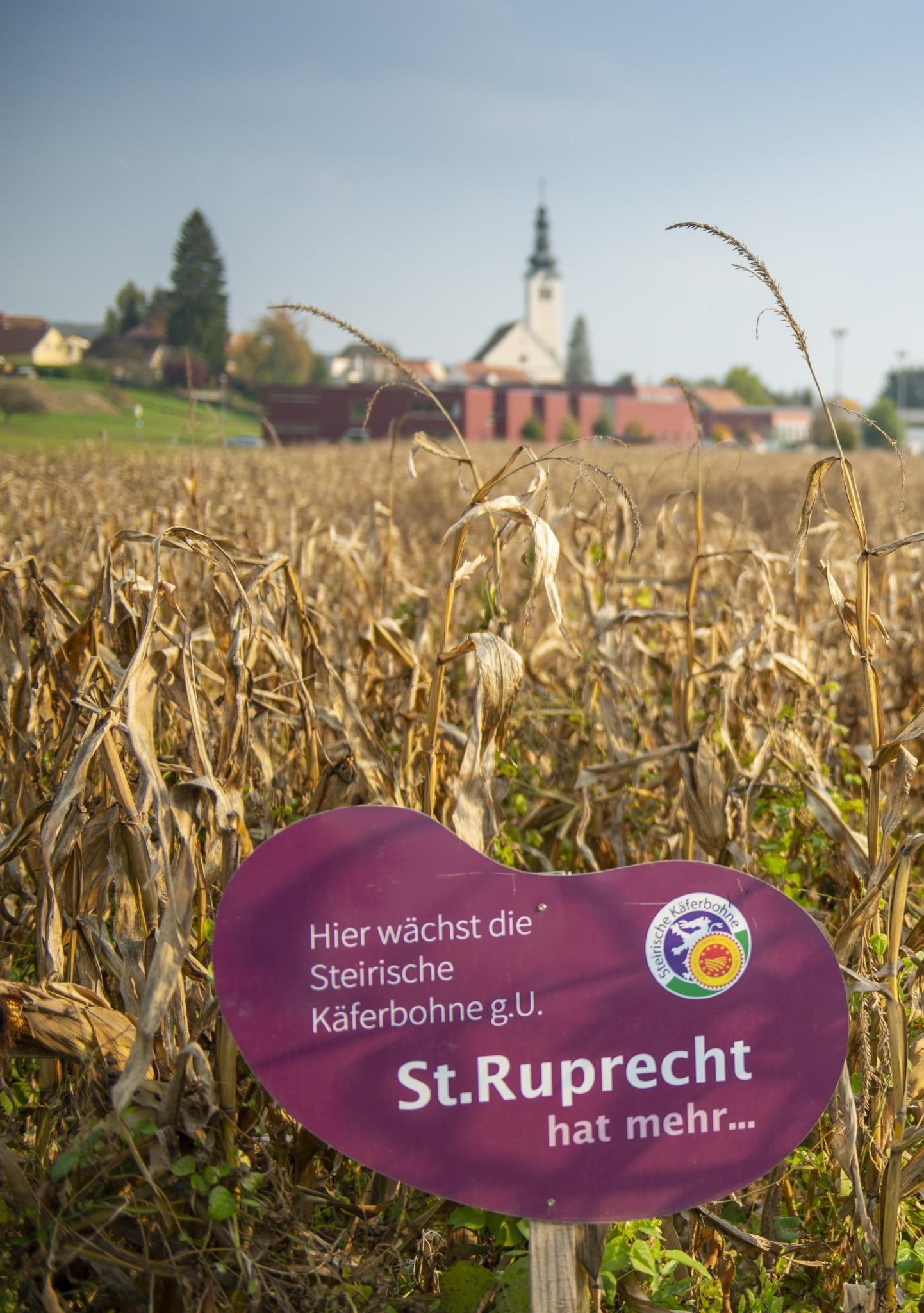 Käferbohne St. Ruprecht