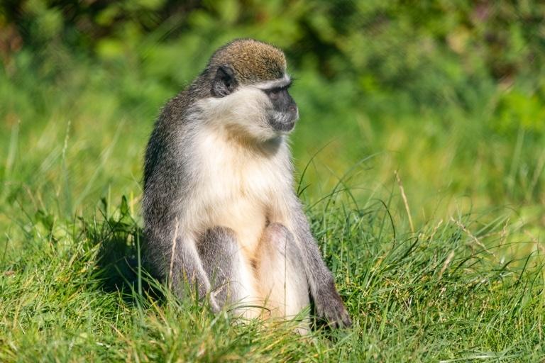 Tierwelt Herberstein Affe