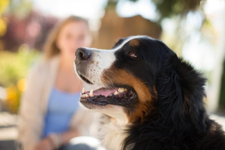 Urlaub mit Hund im Garten-Hotel Ochensberger