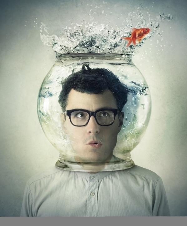 Sie sehen ein Bild von von Manel Rubey mit dem Programm Goldfisch