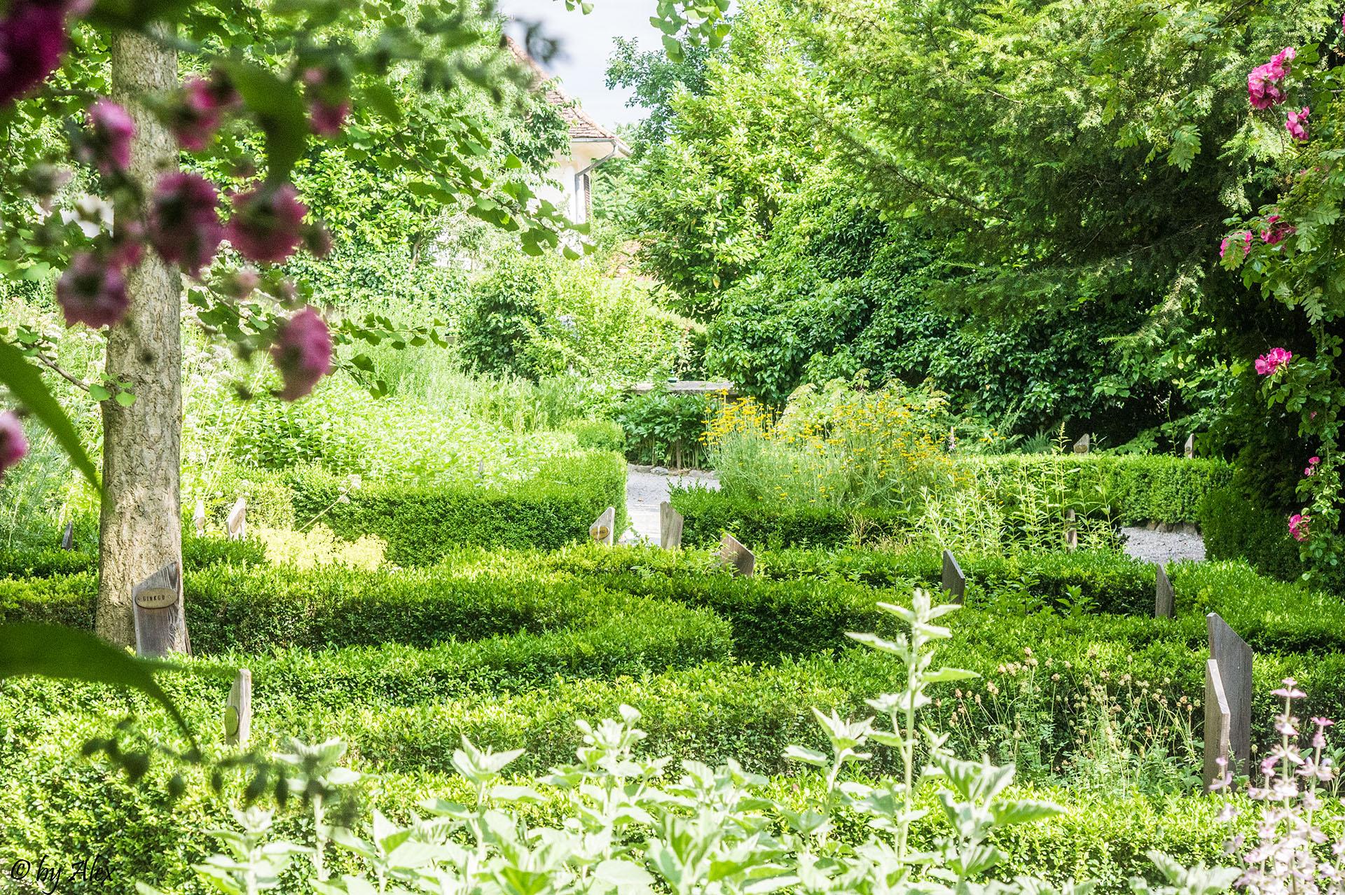 Der Kräutergarten im Sonnenschein