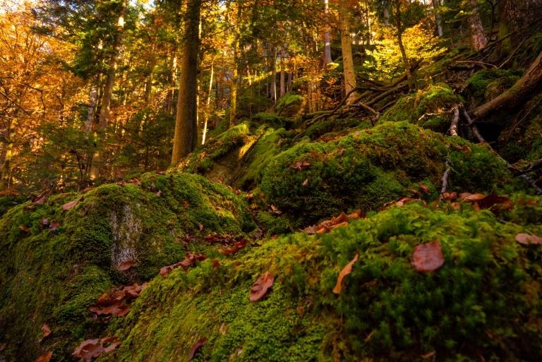 Moos bedeckte Steine in einem Wald