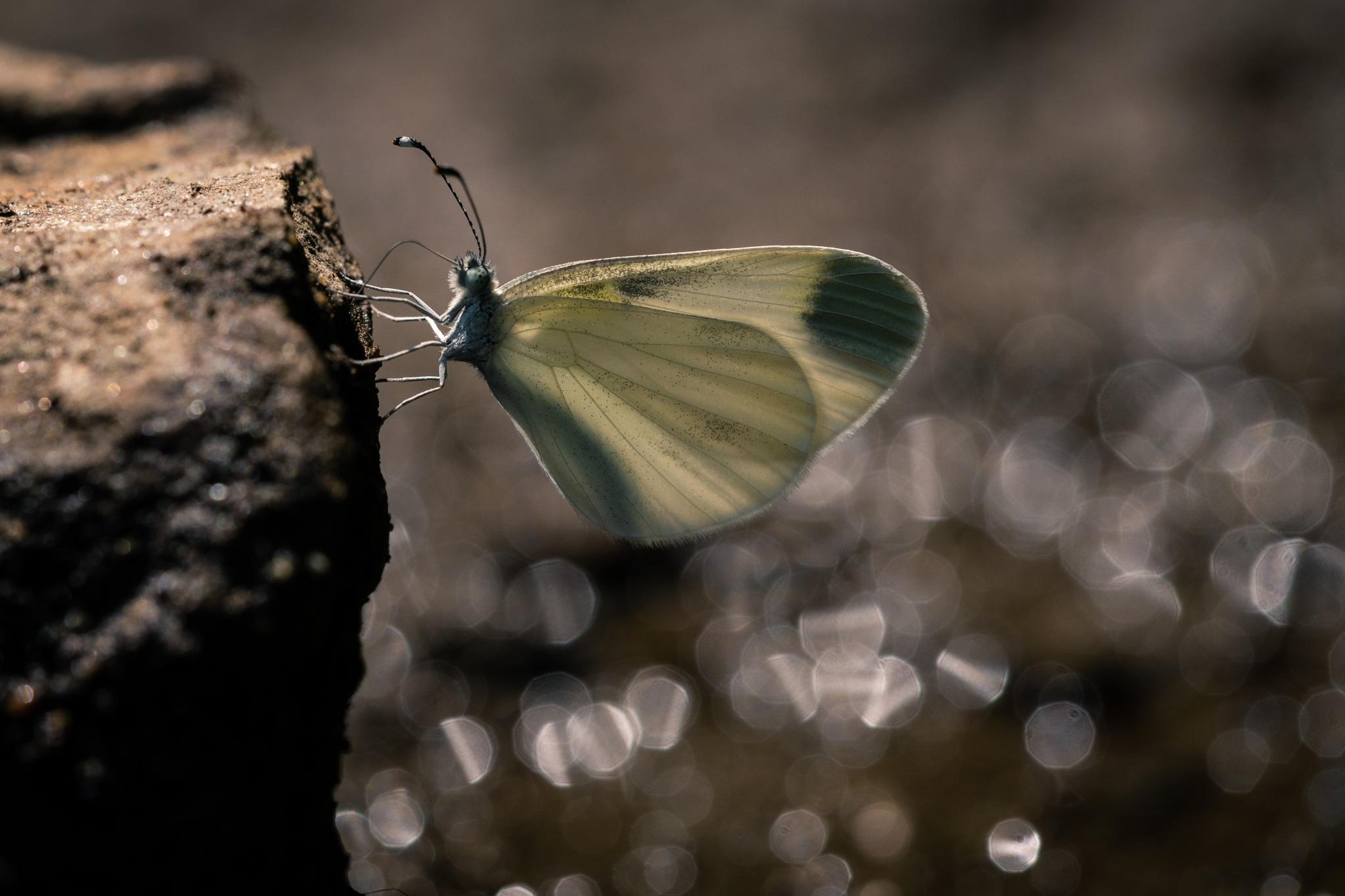 Ein Schmetterling welcher auf einem Stein sitzt