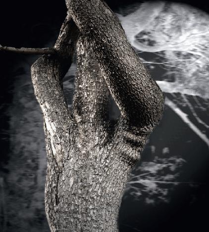 Sie sehen ein Bild eines Baumes von Heinz Pachernegg
