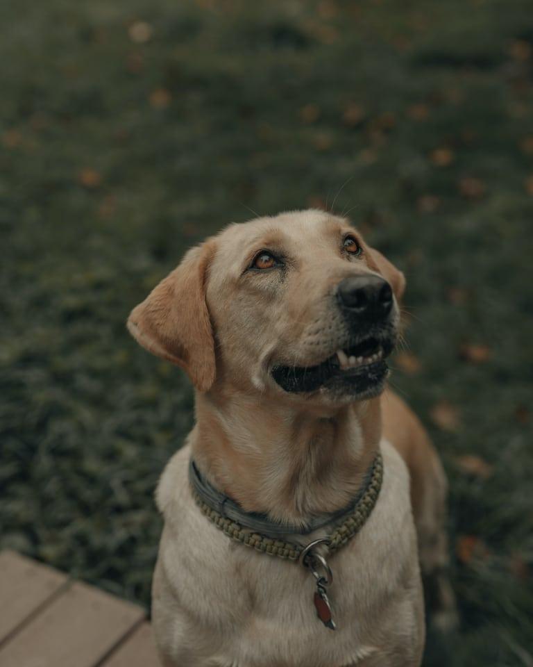 Hund copyright Photo by Clay Banks on Unsplash