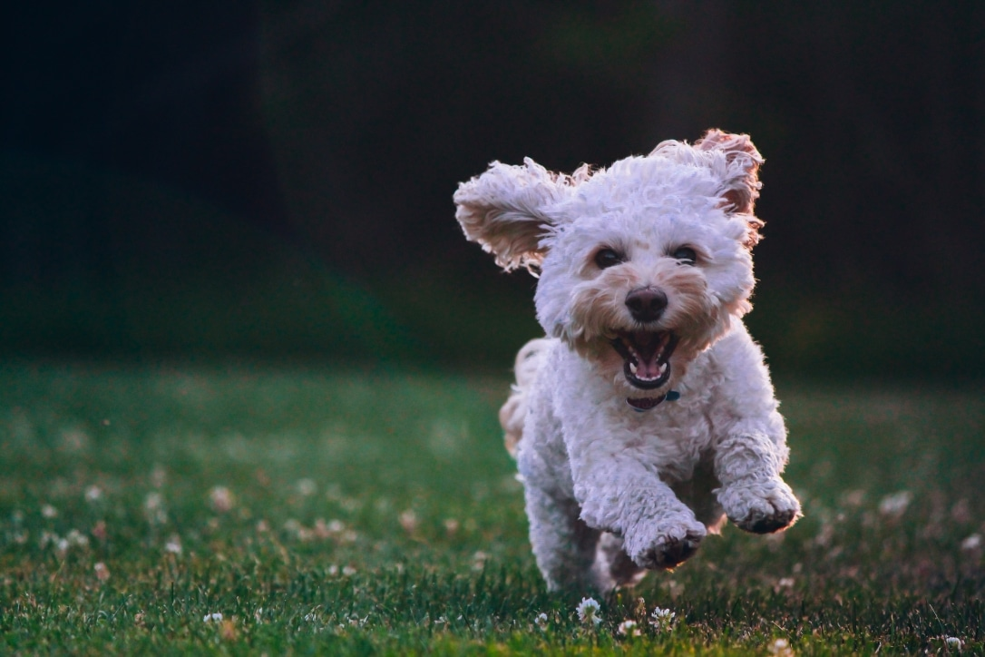 Hund im Freien copyright Photo by Joe Caione on Unsplash